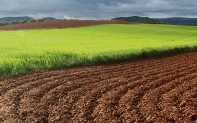 Reportaje «La Mancha por los siglos de los siglos»